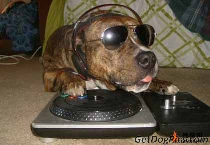 A-Funny-Dog-DJ